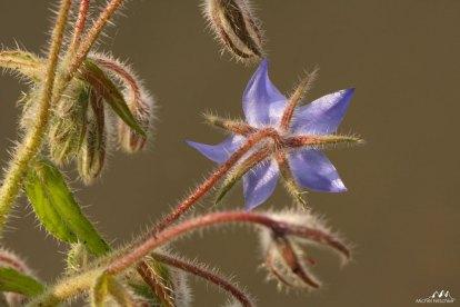 Autres fleurs 5