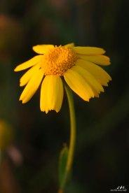 Autres fleurs 10
