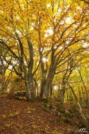 Forêts 19