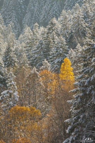 Forêts 21