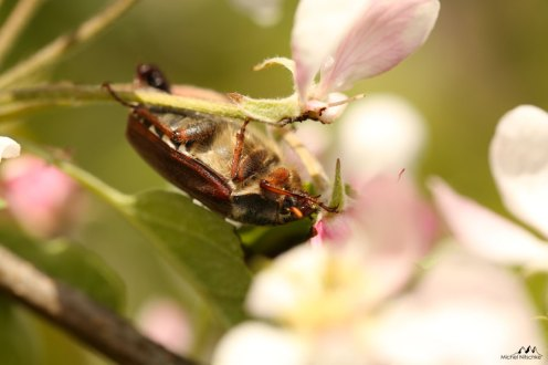 Insectes 2