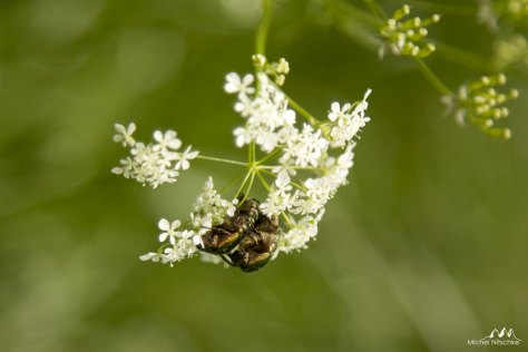 Insectes 3