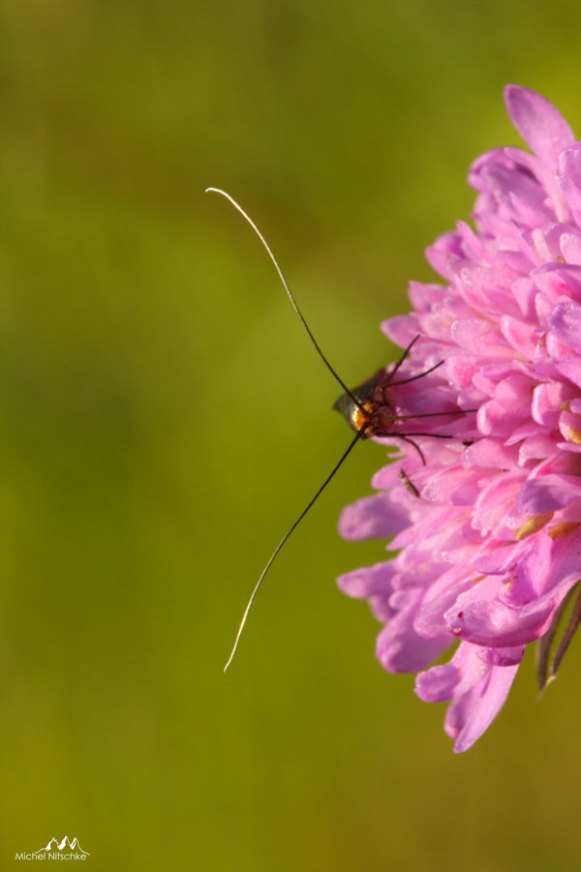 Insectes 5
