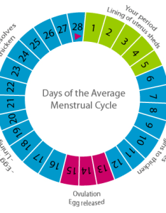 The menstrual cycle chart also three phases in of  woman rh creaconceptions