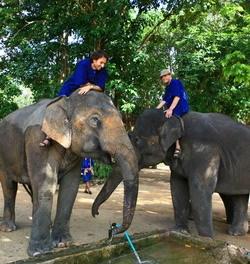 Una vita da mahout, l'uomo degli elefanti.