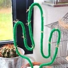 Cactus Tricotin