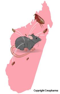 L'épidémie de peste pulmonaire de 2017 à Madagascar caractérisée par les chercheurs