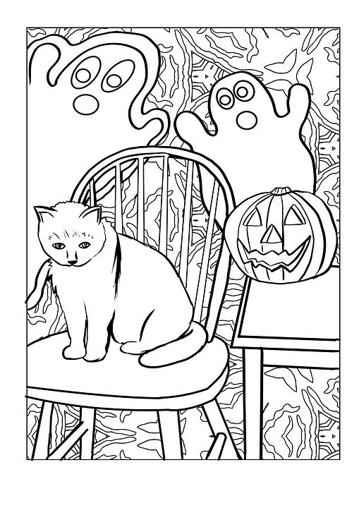 cat-1949060_960_720