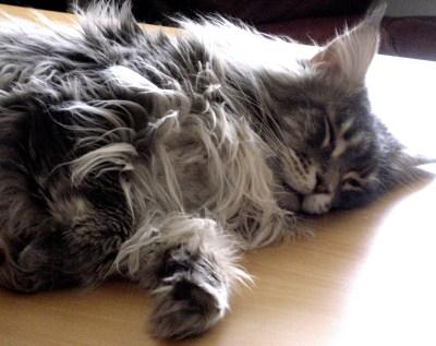 Tsunami - Cat Nap