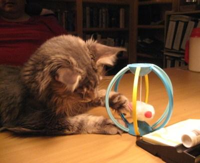 Kitten At Play (1) - Tsunami at Create With Joy