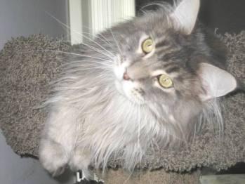 No Ordinary Cat - Tsunami at Create With Joy