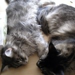 My 2 Cats