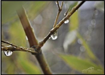 Hood Photography - Rain Returns