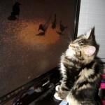 Cat TV - 1