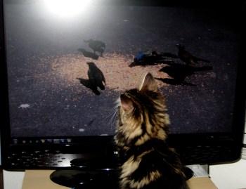 Cat TV 3