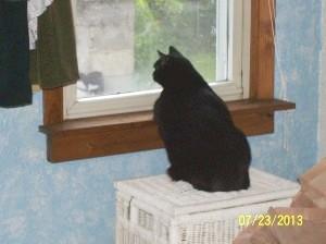 Harley Loves To Birdwatch