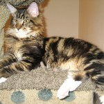 Magellan - The Watch Cat