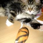 Magellan-Kitten-12-13-1a