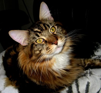 Magellan - National Answer Your Cat's Question Day
