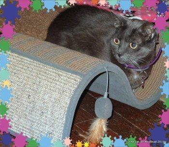 Fiona - The Cat On My Head