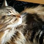 Magellan-One-Content-Cat-Create-With-Joy.com