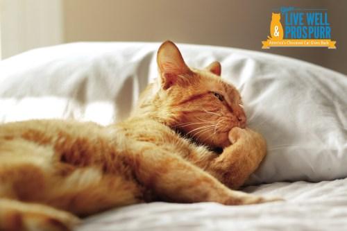 Morris_Sleeping