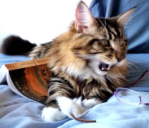Magellan - Literary Wild Cat