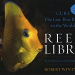 Reef-Libre