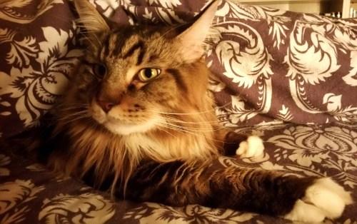 Cozy-Bed-Cozy-Cat-1-Create-With-Joy.com