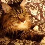 1-19-16 Cozy-Bed-Cozy-Cat-Create-With-Joy.com