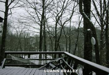 LuAnn Braley