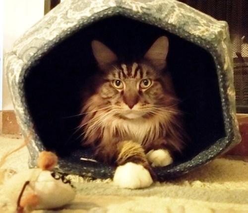 Magellan Inside His Cat Ball