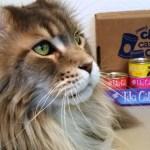 Tsunami-Tiki-Cat-Create-With-Joy.com