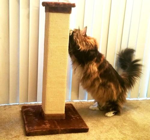 Magellan Tests The Frisco Cat Post