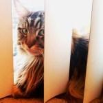 Magellan Watching The Frisco Post