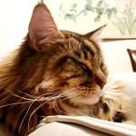 Magellan-Create-With-Joy.com-Tranquil-Kitty