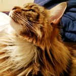 Freshly Laundered Cat