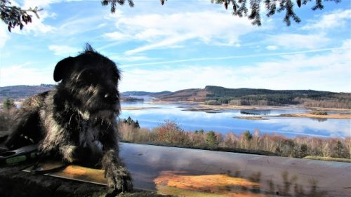 Gary the wonder hound lac de vassiviere january