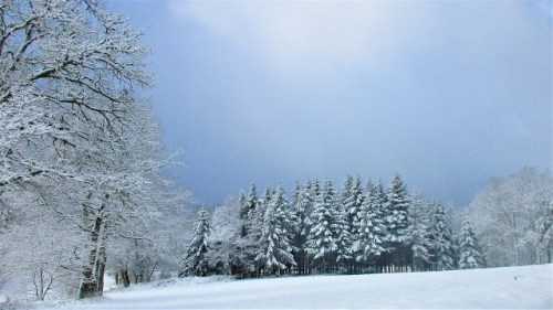 snow forest de tout coeur limousin
