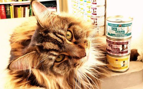Magellan-Create-With-Joy.com-Weruva-Cats-In-The-Kitchen-5