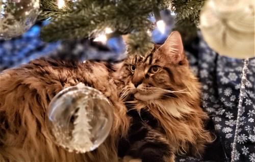 Magellan - Christmas 2019