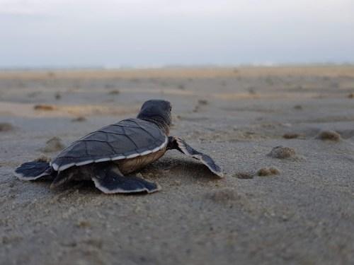 Penyu The Turtle