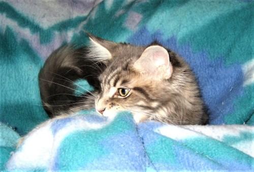 Wild Kitten Tsunami
