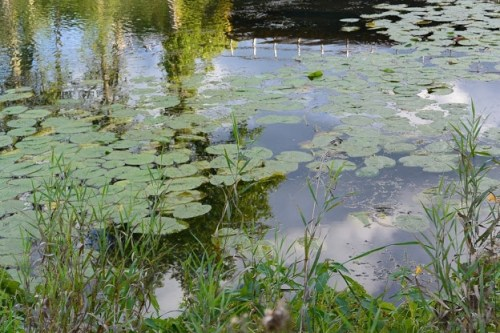 Dixie - Pond