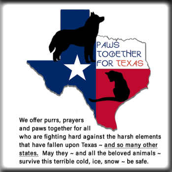 PAWS Together For Texas