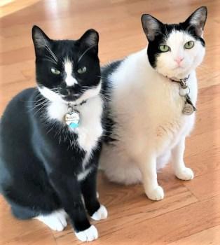 Ebony-Ivory-Cats
