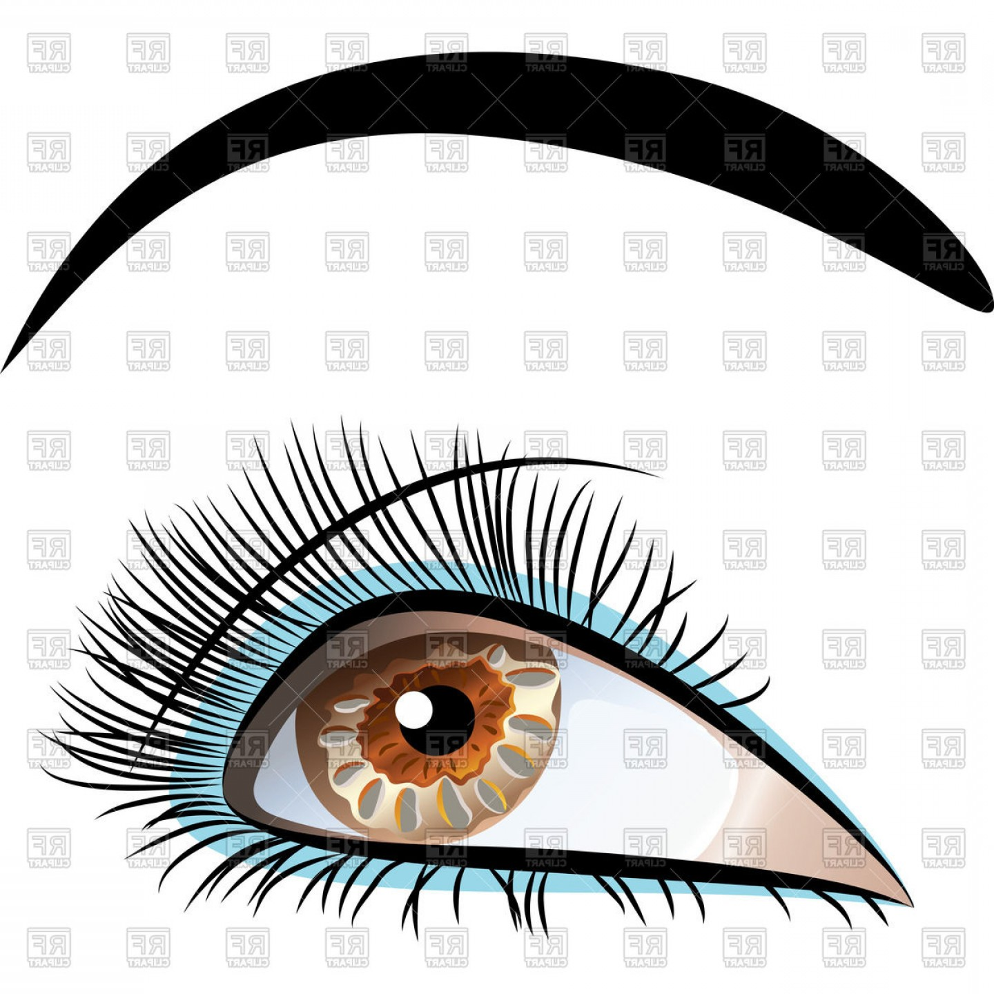 hight resolution of beautiful brown eye with long eyelashes and black eyebrows vector clipart