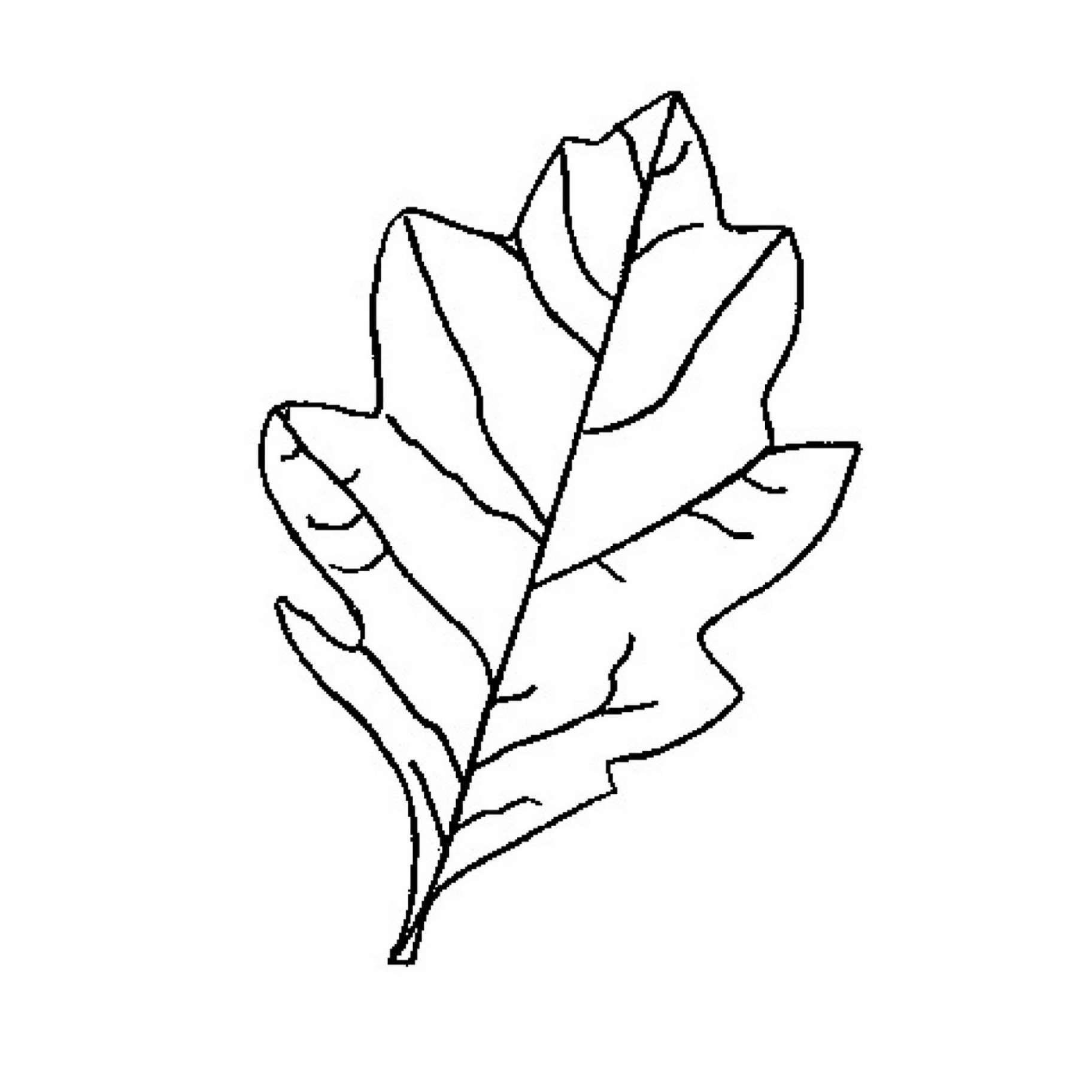 hight resolution of how to draw an oak leaf oak leaf outline printable clipart free to use clip art resource