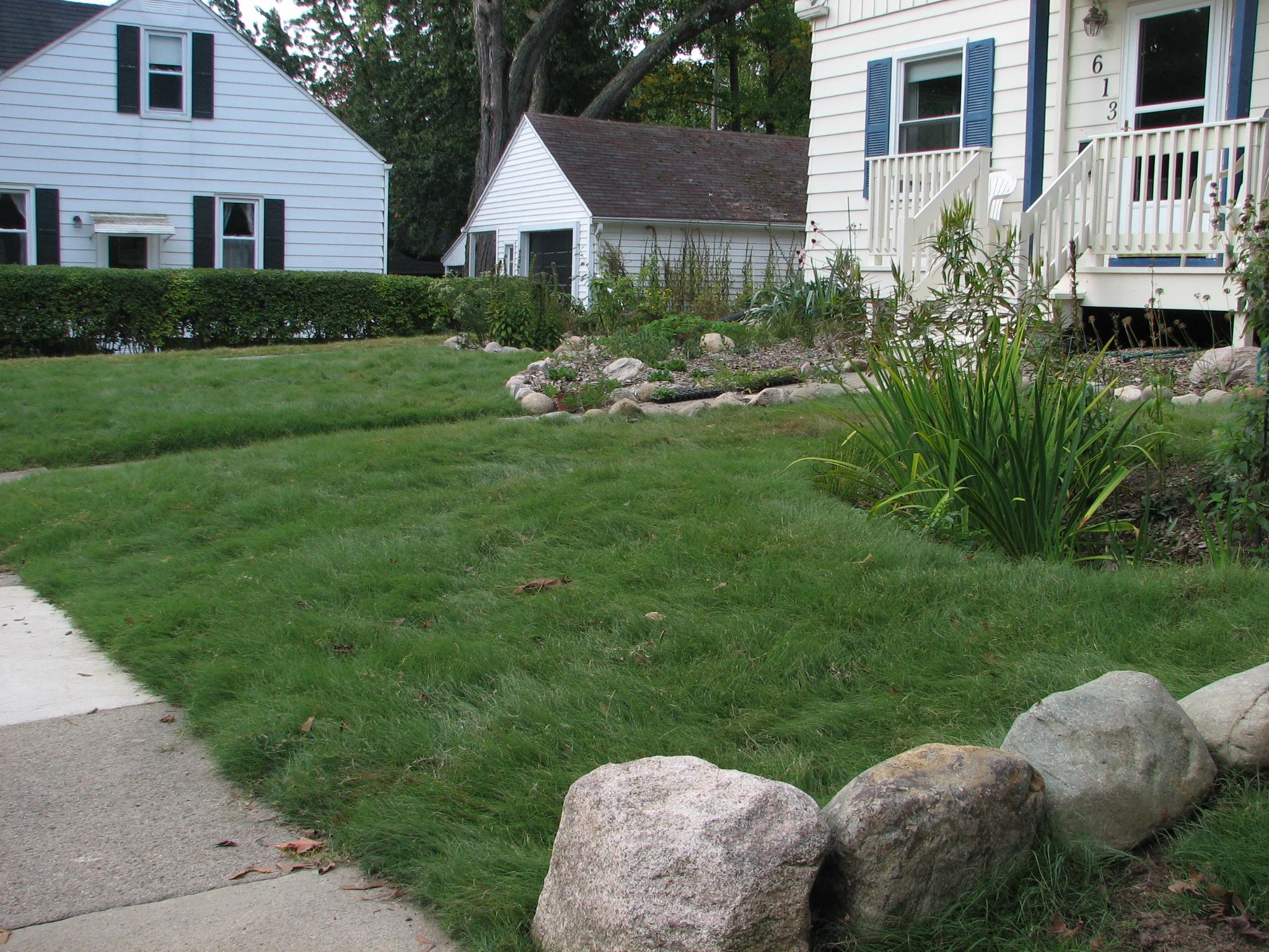 Grass Alternatives  Buffalo Grass in Ann Arbor  Creating