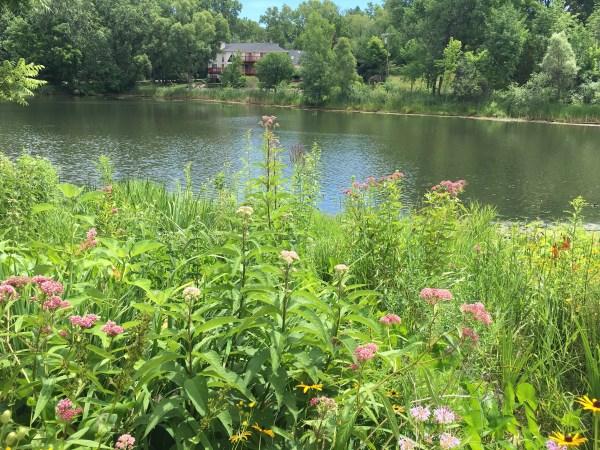 shoreline plants & landscaping